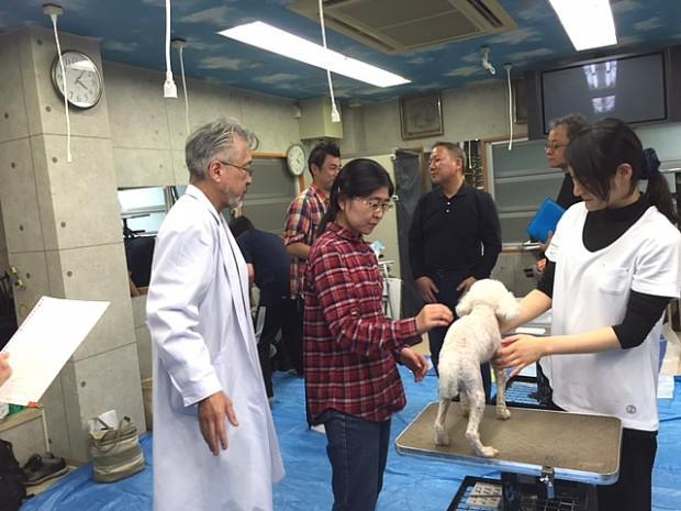 日本獣医中医薬学院で一回目のマスターコースの実習