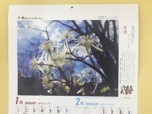 名古屋の病院のトイレに貼ってあるカレンダー