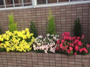 病院前の花壇