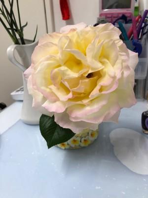 飼い主様から頂いた薔薇