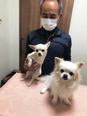 Yさんとモカちゃん、Teaちゃん