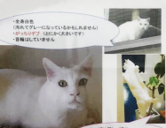 名古屋市昭和区長池町付近で猫が行方不明になっています